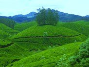 kerala honeymoon packages 3 nights 4 days.Rs.8399/-PP