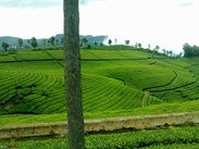 Mysore, Ooty (3nights / 4days) Package Rs. 7300 per head ( Total 6 Pax )