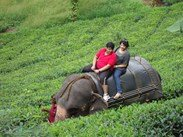 kerala tour packages with price (5 Nights / 6 Days) Rs.9299/-PP